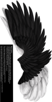 Dual Upright Wing - Black-White