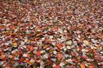 Carpet of Red