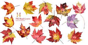 Maple Leaf Pack 2