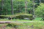 Northbend 2012 11