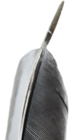 Black and White Feather PNG