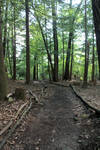 Coopers Rock Path 02