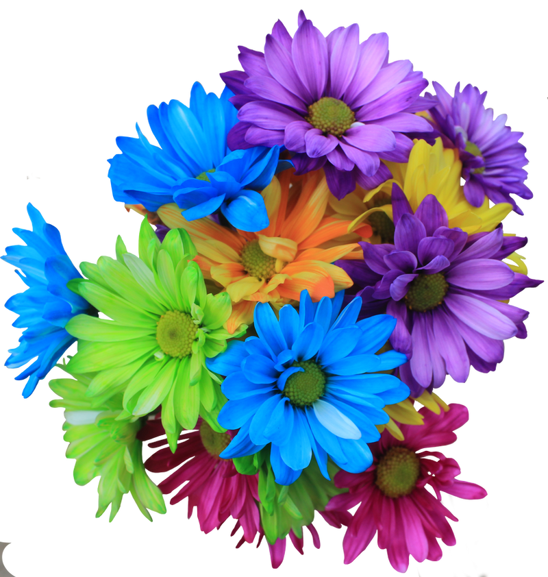 Daisy Bouquet PNG by Thy-Darkest-Hour on DeviantArt