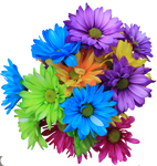 Daisy Bouquet PNG