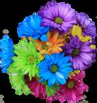 Daisy Bouquet PNG