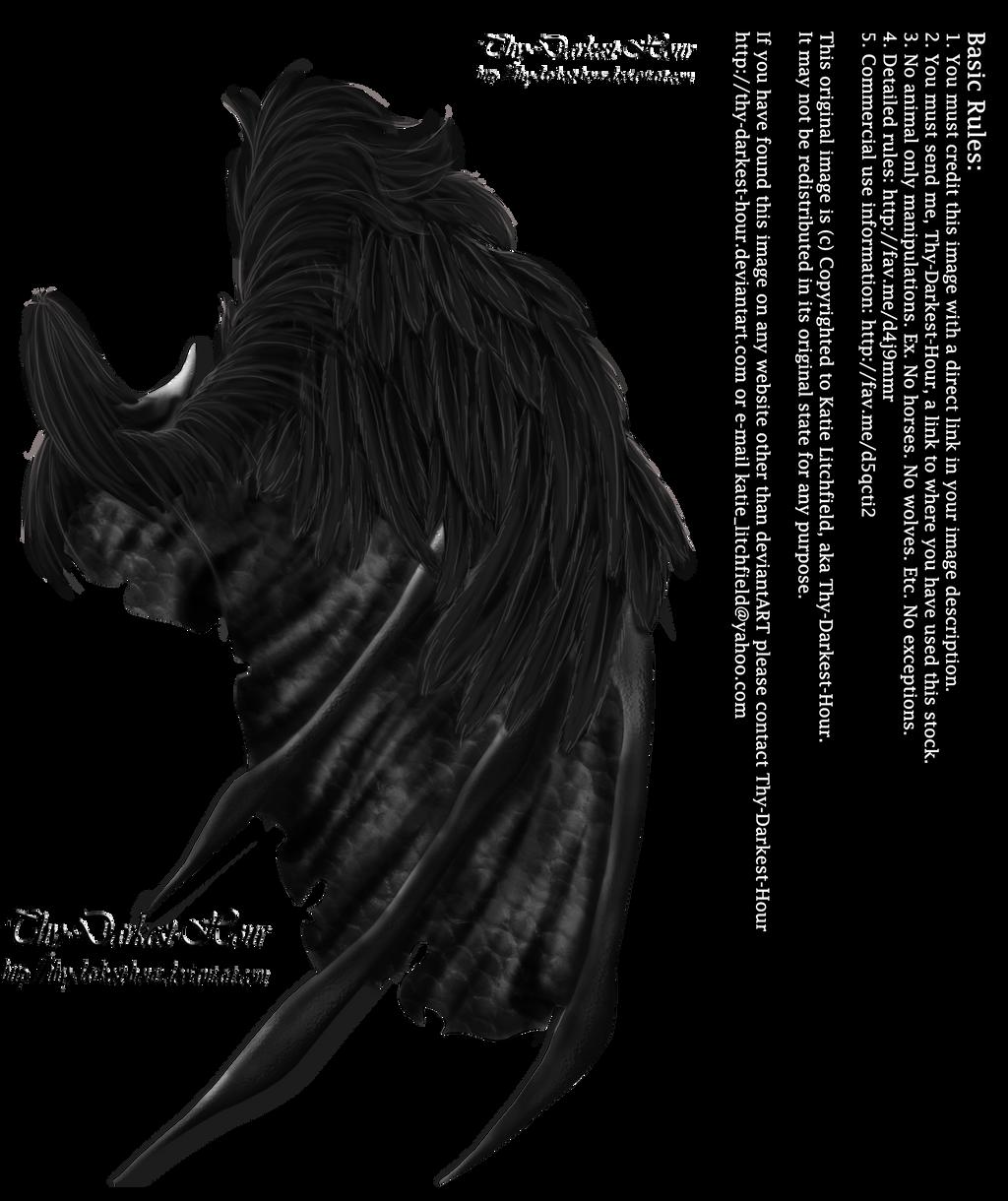 Feathered Demon Wings 02 By Thy Darkest Hour On Deviantart
