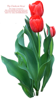 Tulip Greenery PNG by Thy-Darkest-Hour