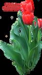 Tulip Greenery PNG