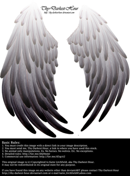 Solace Wings - Silver to Black