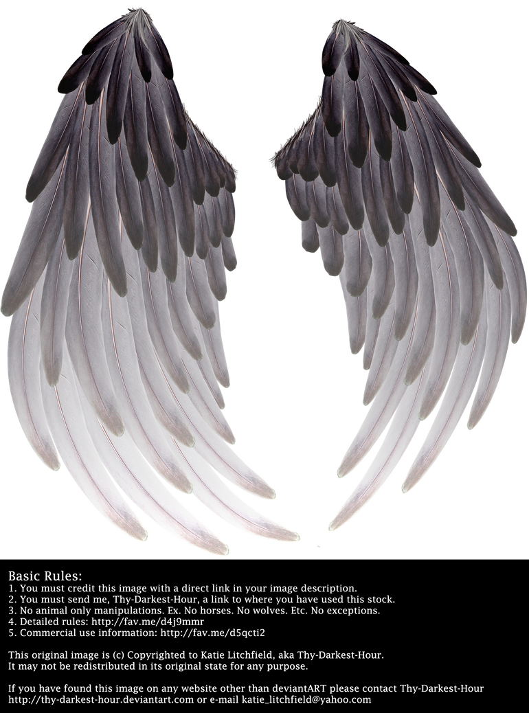 Solace Wings - Black to Silver by Thy-Darkest-Hour