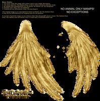 Enchantress Wings - Golden by Thy-Darkest-Hour
