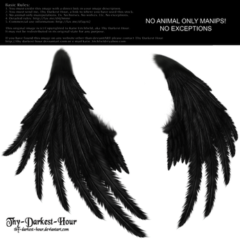Enchantress Wings -Black by Thy-Darkest-Hour