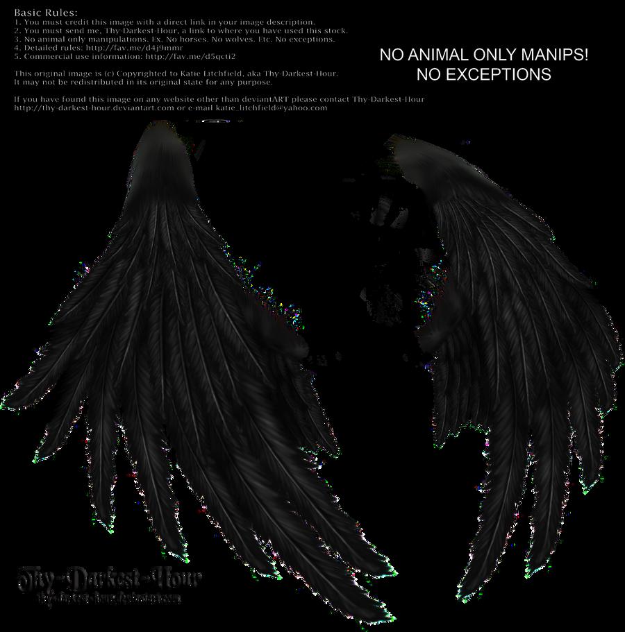 Enchantress Wings -Black