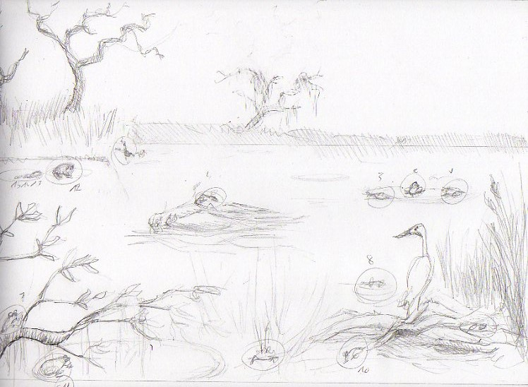 find the frogs : preliminary drawing by Dandeliesque