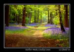 Merlin's Woods