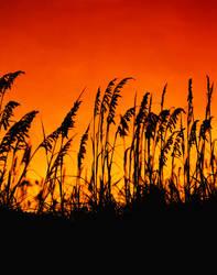 Sunset on South Padre Island, by cjchmiel