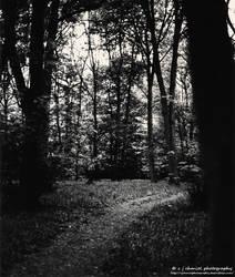Bluebell woods by cjchmiel