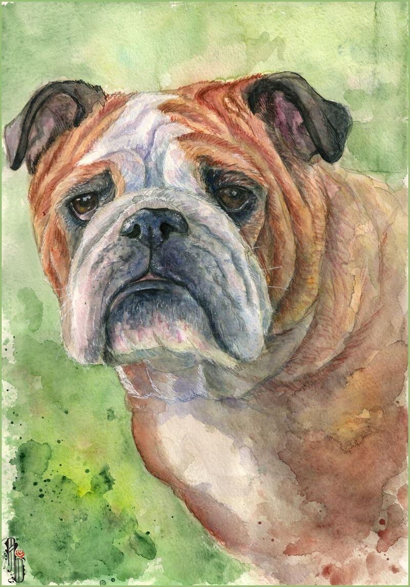 Bulldog by AlbinaDiamond