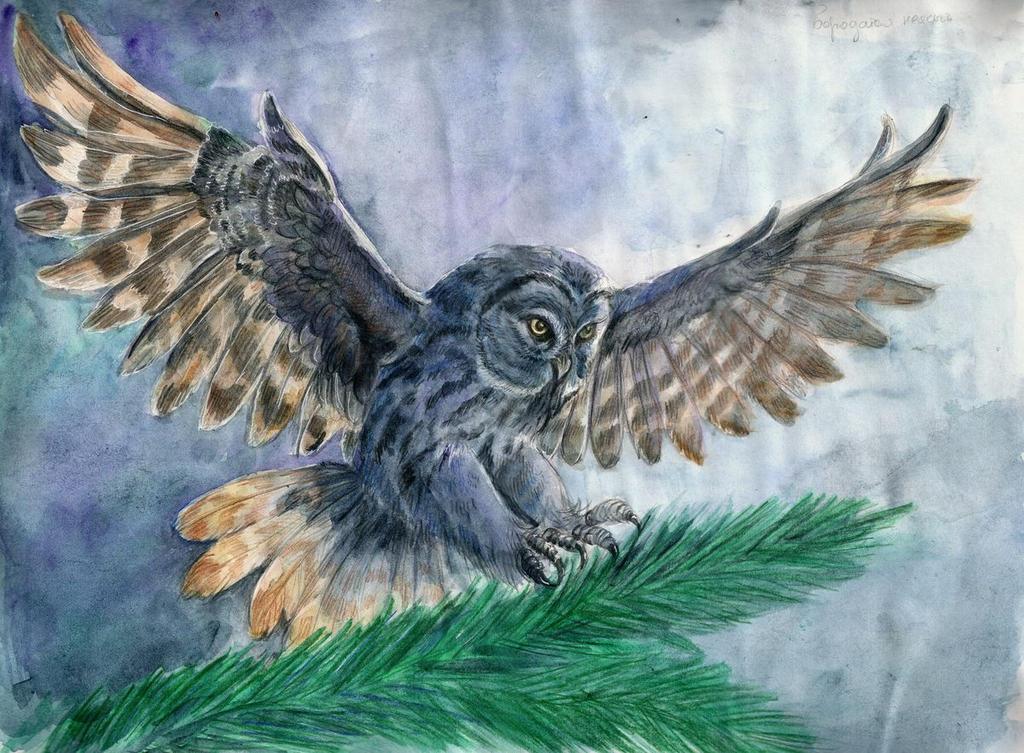 Owl by AlbinaDiamond