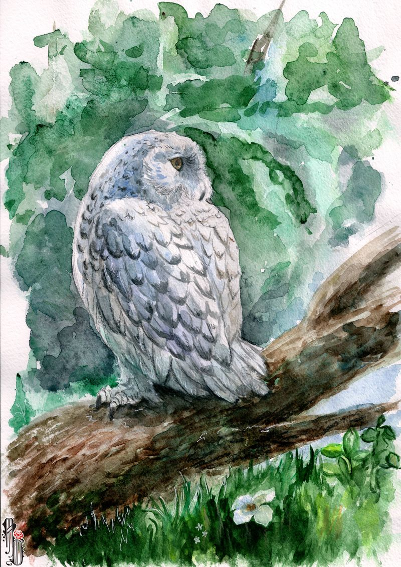 Owl II by AlbinaDiamond