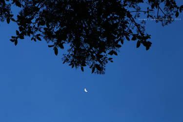 la luna y las sombras