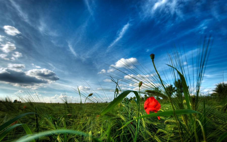 Majestic Skies - Part VIII