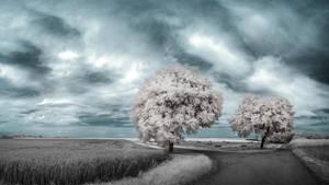 White Trees Part IX