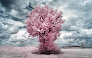 Pink Tree II by myINQI