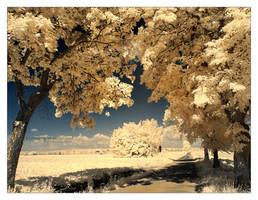 Sommery Wonderland by myINQI