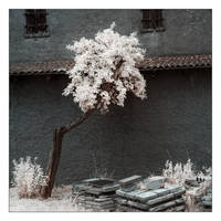 White Trees VII by myINQI