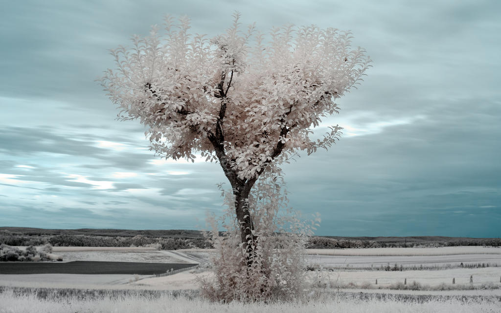 White Trees VIII (Heart Tree) by myINQI