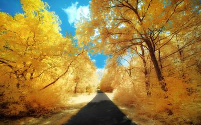 Yellow Trees Part II