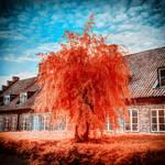 Fiery Orange Tree