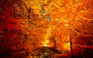 The colors of Autumn - Part II by myINQI