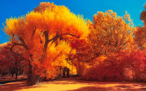 The colors of Autumn - Part IV by myINQI