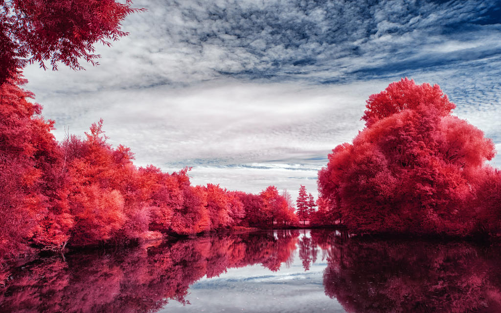 Infrared Trees - pt. IV by myINQI