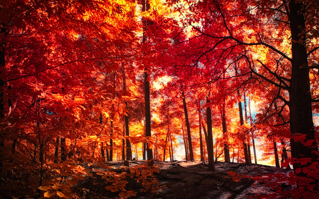The colors of Autumn - Part VII by myINQI