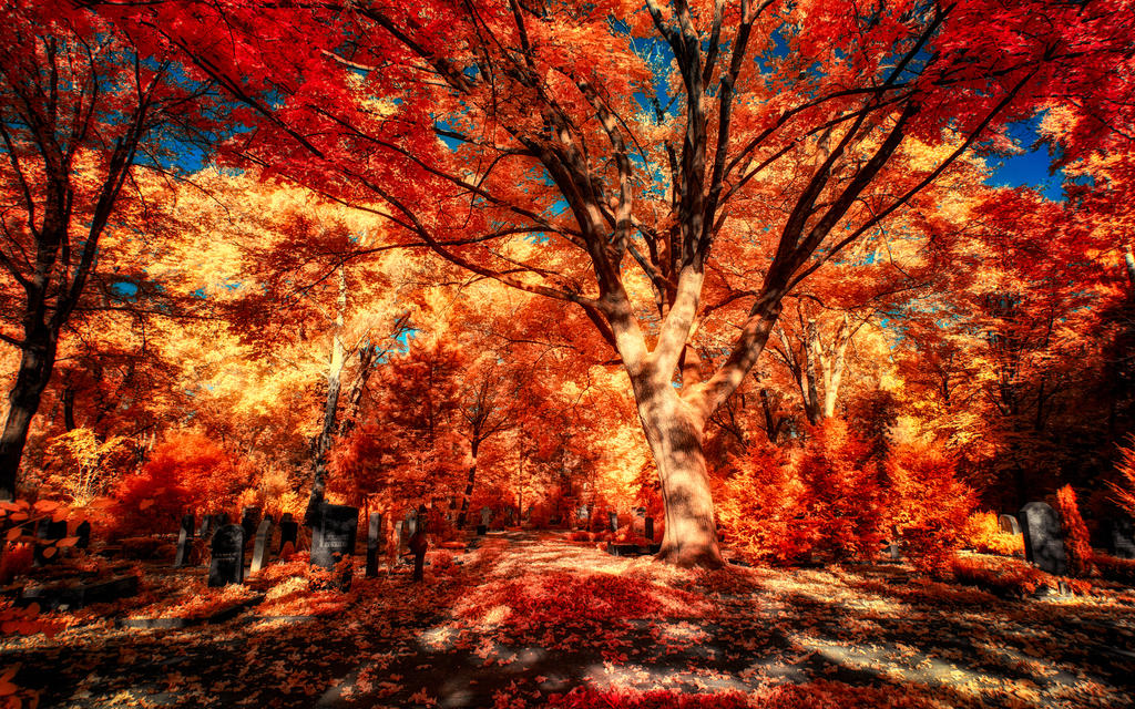 The colors of Autumn - Part IX by myINQI