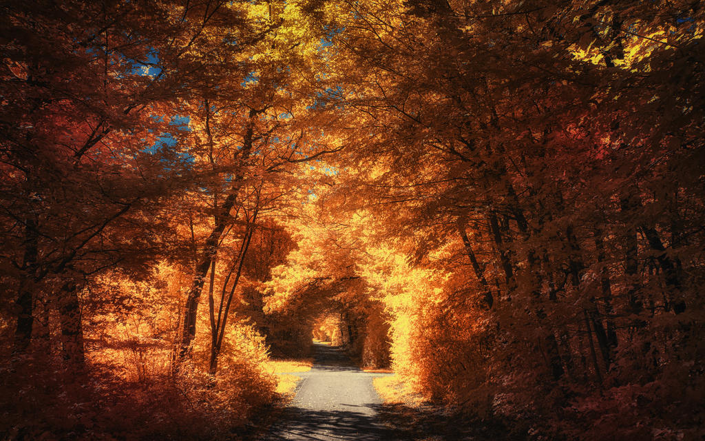 The colors of Autumn - Part XI by myINQI