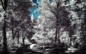 Infrared Trees - pt. X by myINQI