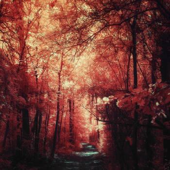 Hidden Path by myINQI