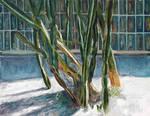 sunlight through cactus