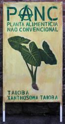 Xanthosoma taioba by tamino