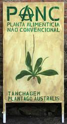 Plantago australis by tamino
