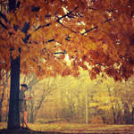 ...autumn