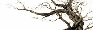 DRAWING FROM INSIDE A TREE by Ensomniac