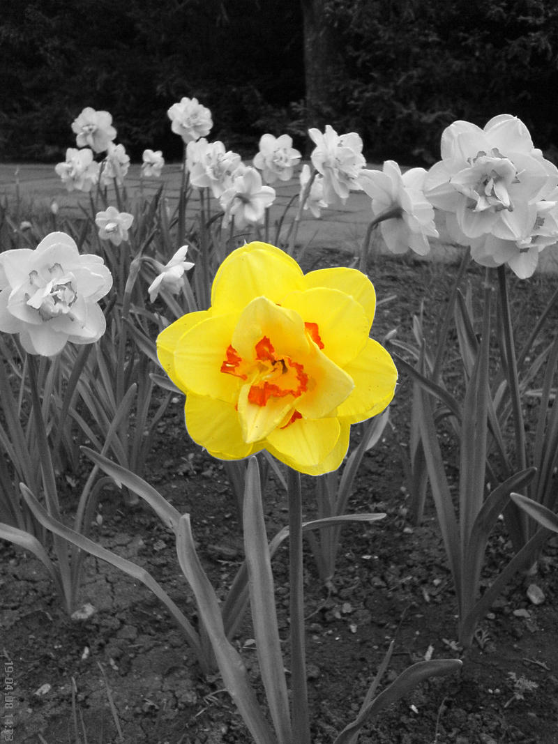 solo una flor con color-diferenciación turística