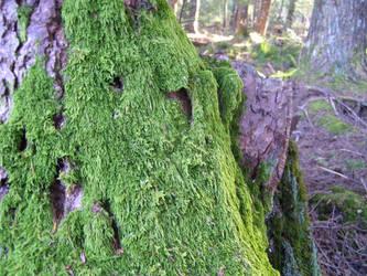 Moss by iamthecockatoo