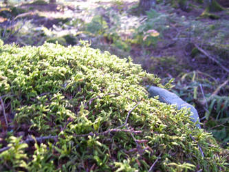Moss 2 by iamthecockatoo