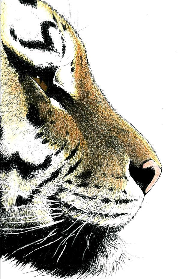 Tiger Profile Realistic by SethWolfshorndl